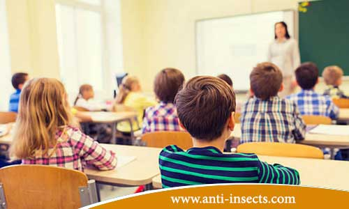 Anti-insect-school