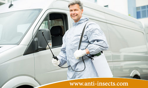 Ways-anti-insect-at-home