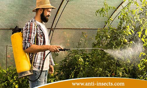 anti-insects-assiut