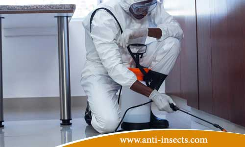 anti-insects-new-valley