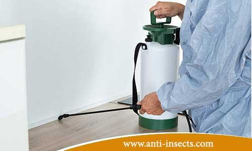 anti-insects-north-of-sinai
