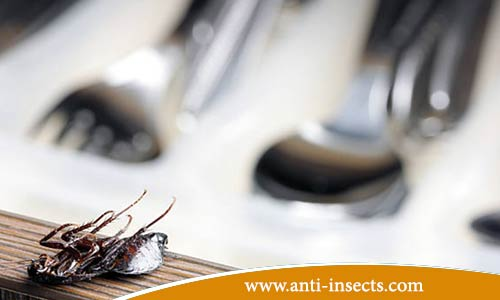 Anti-insect-at-home