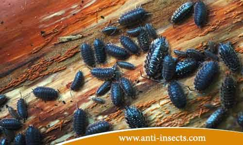 Anti-mite-insect