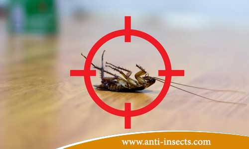 Anti-insect-without-evacuation-homes