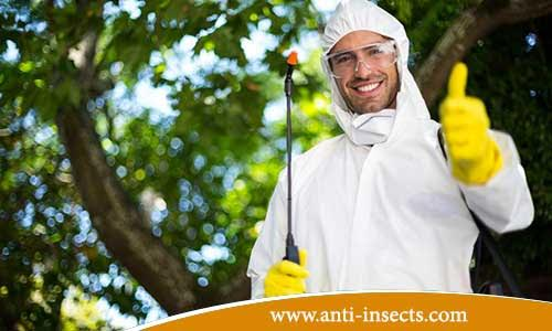 Effective-insecticide-tips