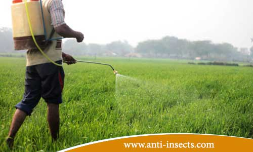 Eradication-insects-agricultural-fields