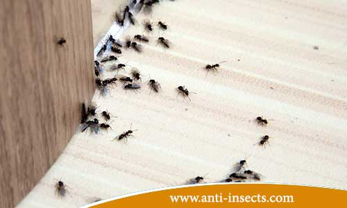 Home-protect-from-insects