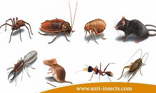 Insects - summer