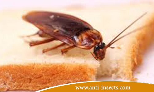 Tips-Avoid-Insects-Kitchens