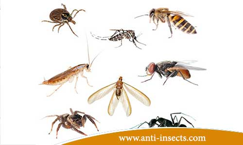 Tips - to prevent - the appearance - insects - at home