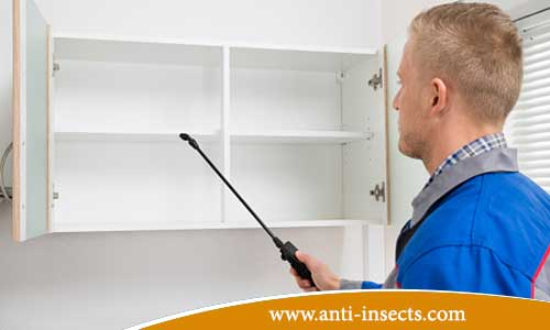 Clean-house-of-insects