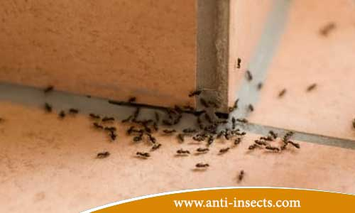Home-cleaning-of-insects