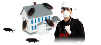 https://www.anti-insects.com/wp-content/uploads/2017/09/Monofia-Insect-Control-Company.jpg
