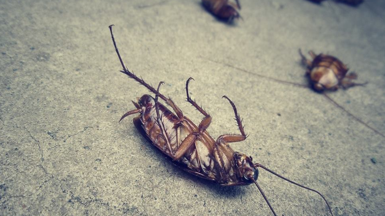 How-to-get-rid-of-crawling-insects-at-home