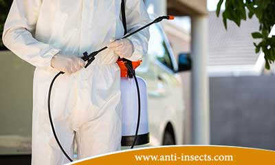 المتكاملة Insecticides-to-eliminate-insect-damage.jpg