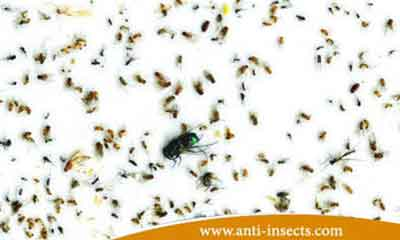 best-insect-control-company-Egypt