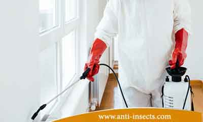 Best-insect-extermination-company
